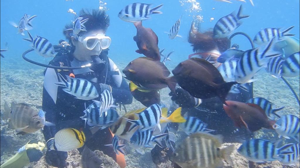 読谷 海 むるむーし 魚 ダイビング
