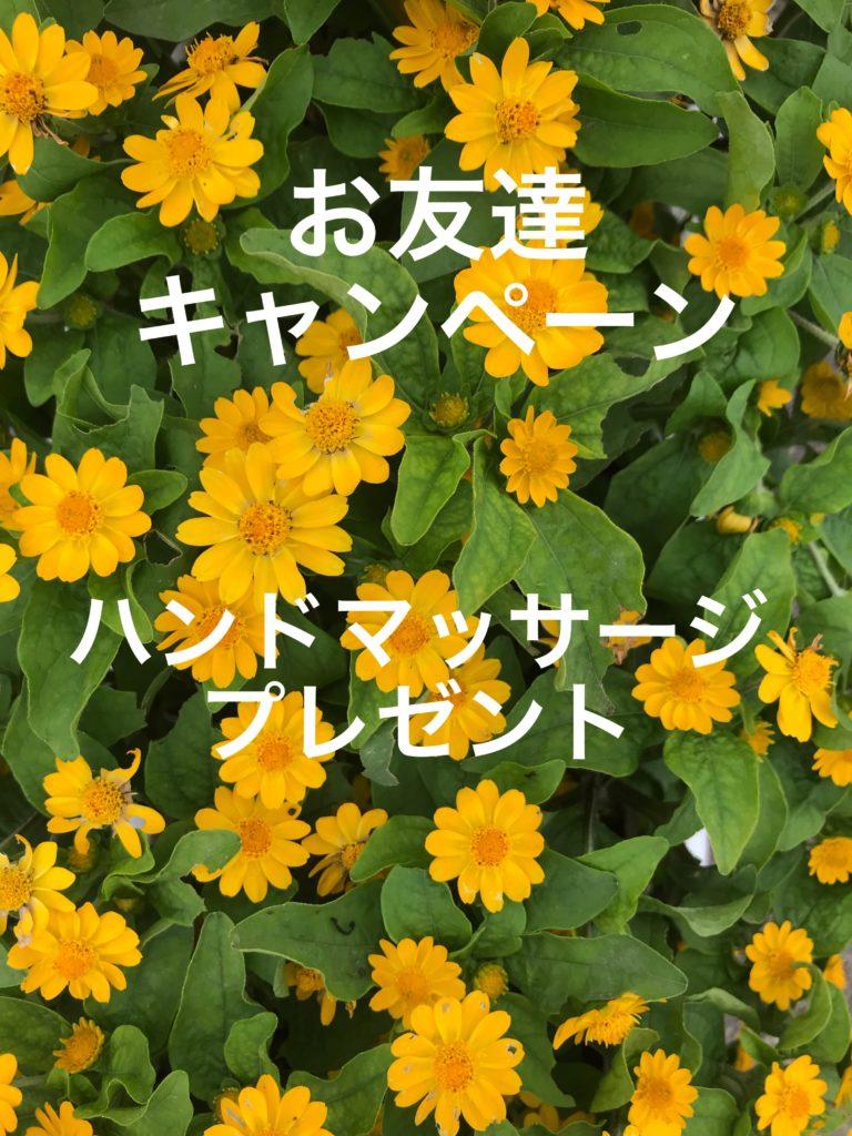 読谷村 お花 ハンドマッサージ