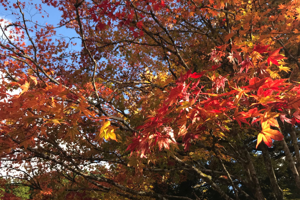 紅葉 和歌山県 高野山